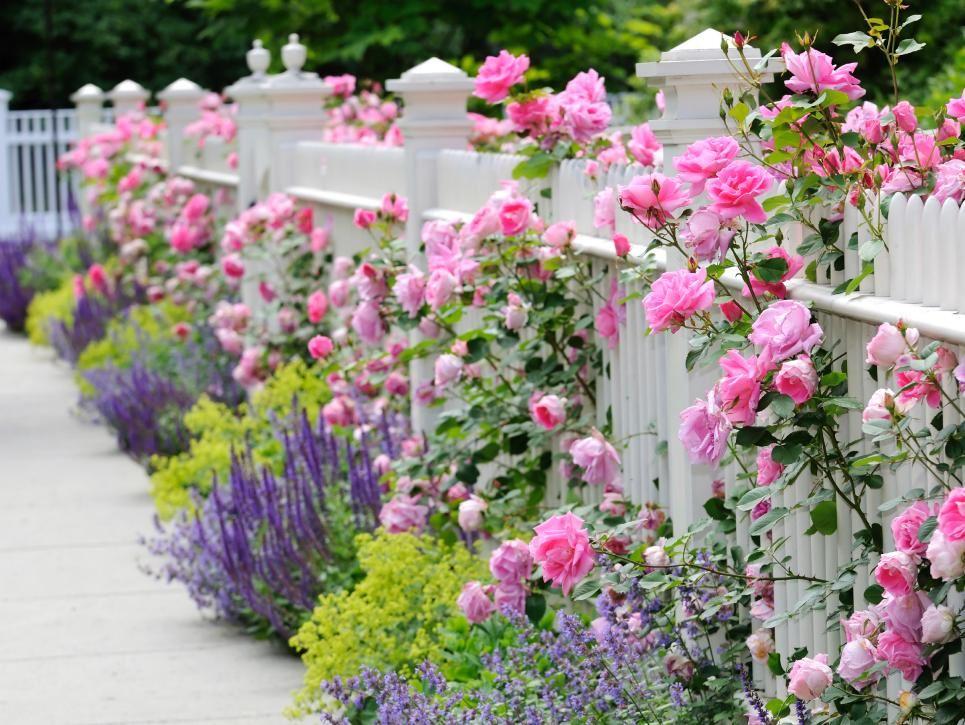 fiori shabby